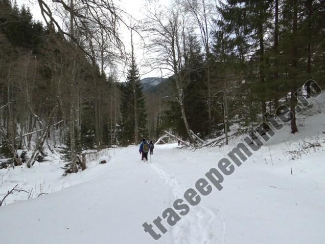 Drumul forestier Tamas_1