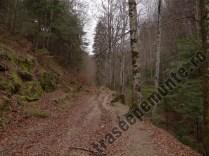 Dealul Morii_drum forestier