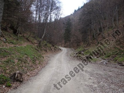 Drumul Valea Berii_1