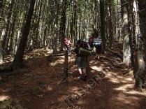 urcare spre Saua Gradisteanu