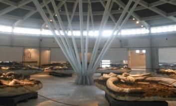L'Amministrazione comunale interviene sul Paleontologico di Pietrafitta