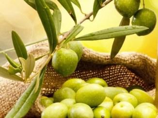 Olio in Festa a La Potassa di Tavernelle di Panicale