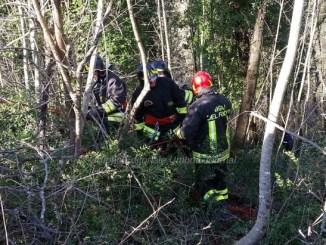 Incidente a Castiglione della Valle, muore 30enne mentre tagliava pianta
