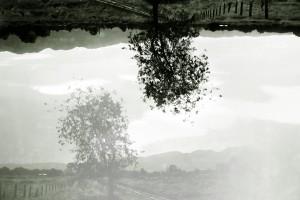 árbol BYN