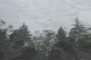1-Agua y bosque