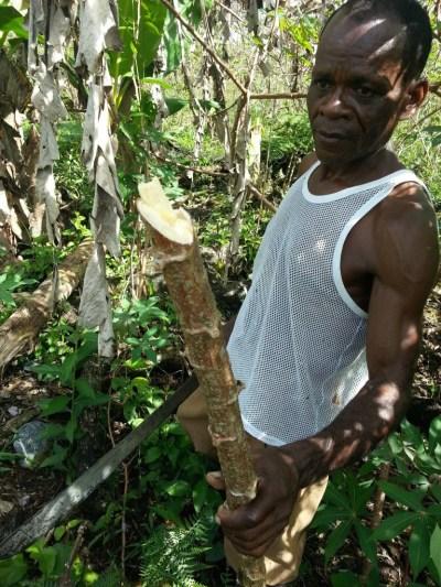 Don Isabelino cuenta como sus cultivos de piña, yuca y caña fueron afectados