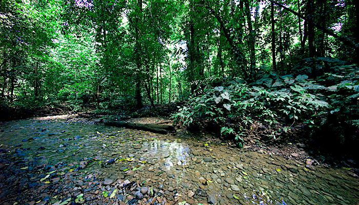 Bosque de Selva Tropical en Costa Rica. Foto: Jeffrey Su