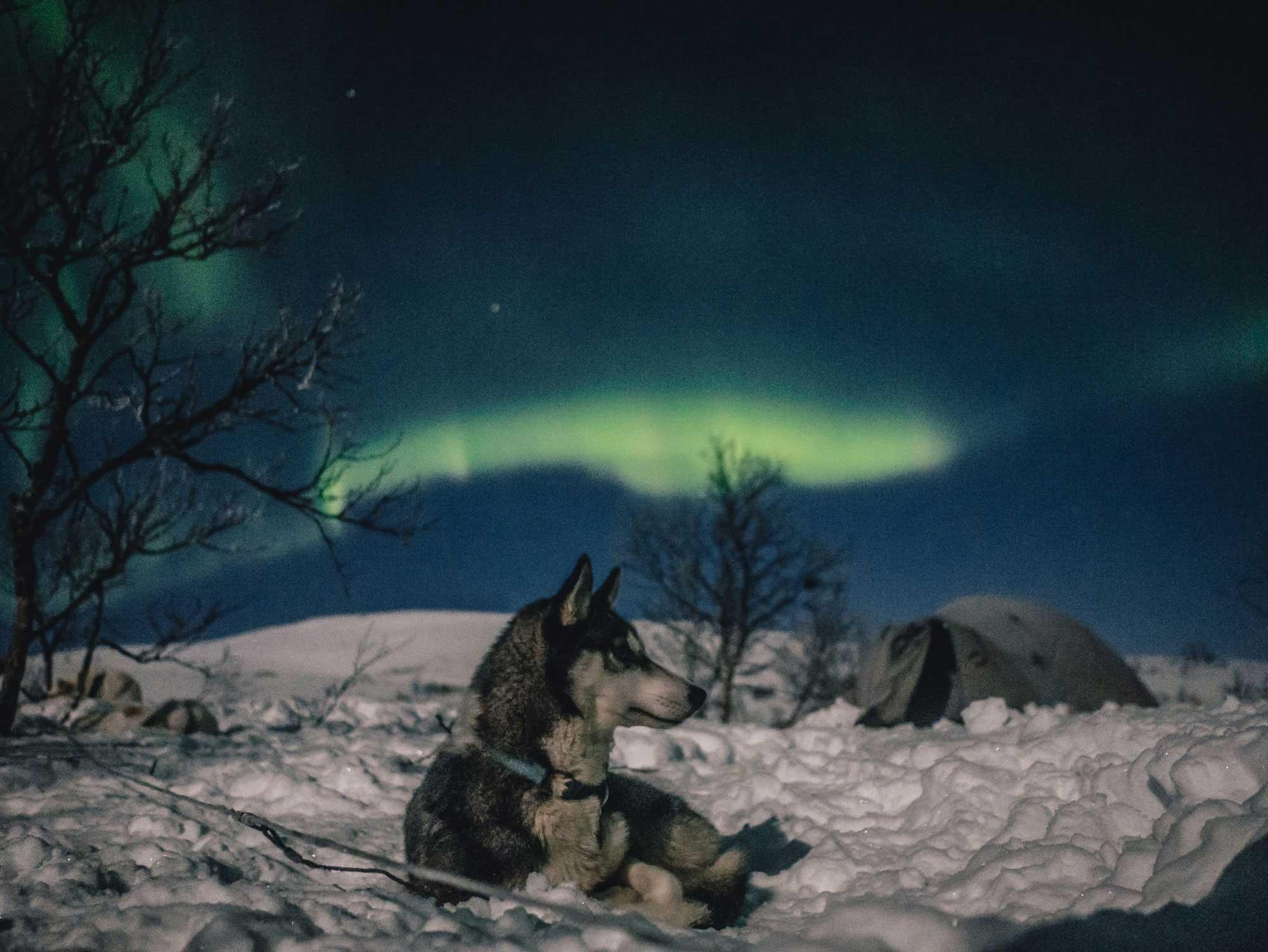 Northern Lights Kennel