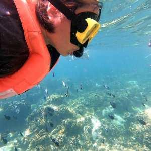 ดำน้ำเกาะช้าง ดูปะการัง ราคา 560 บาท ด้วยเรือไม้