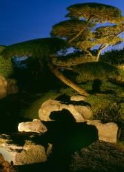Halogen Beleuchtung Garten
