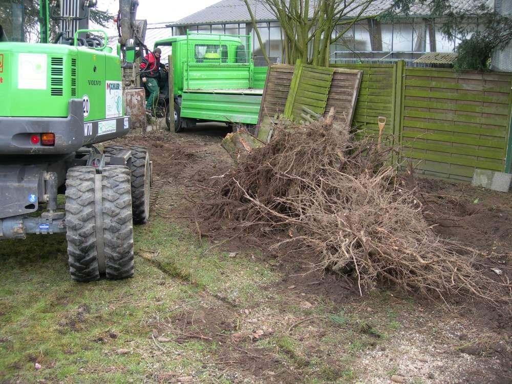 Ein Teil des alten Baumbestand wird entfernt um Platz zu schaffen
