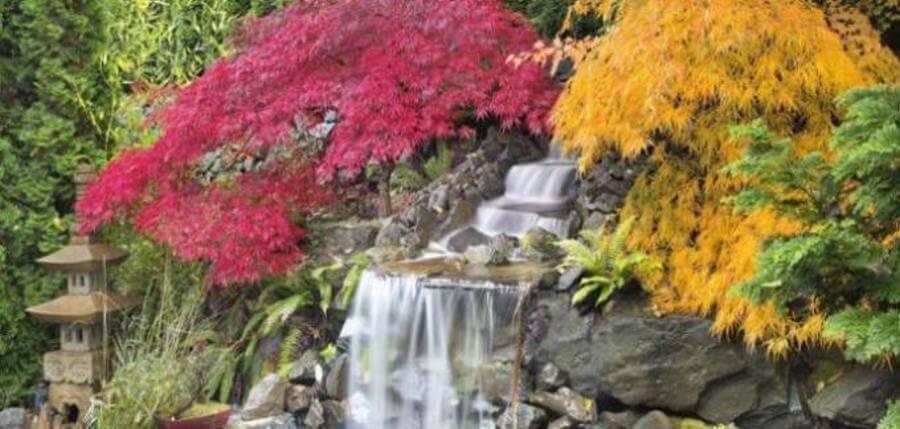 Die Blattfarben im Garten