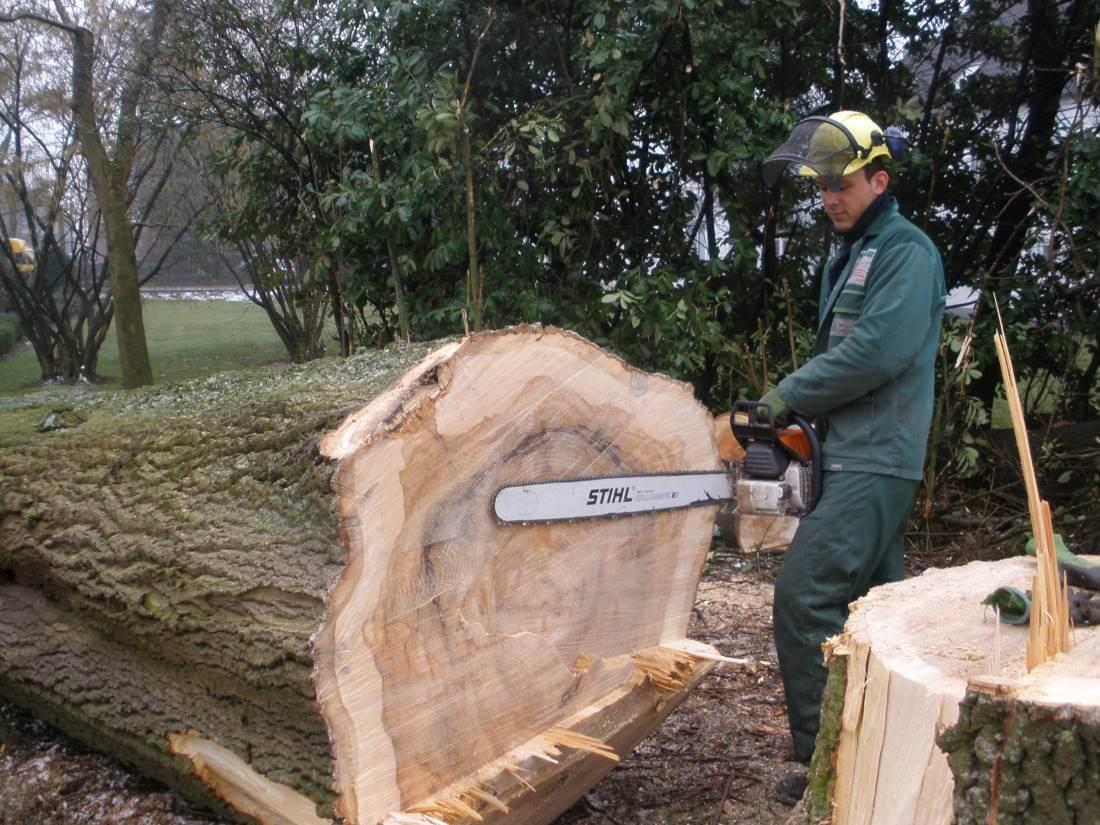 Fabelhaft Baumfällung   Galabau Mähler   Baum fällen &RO_63