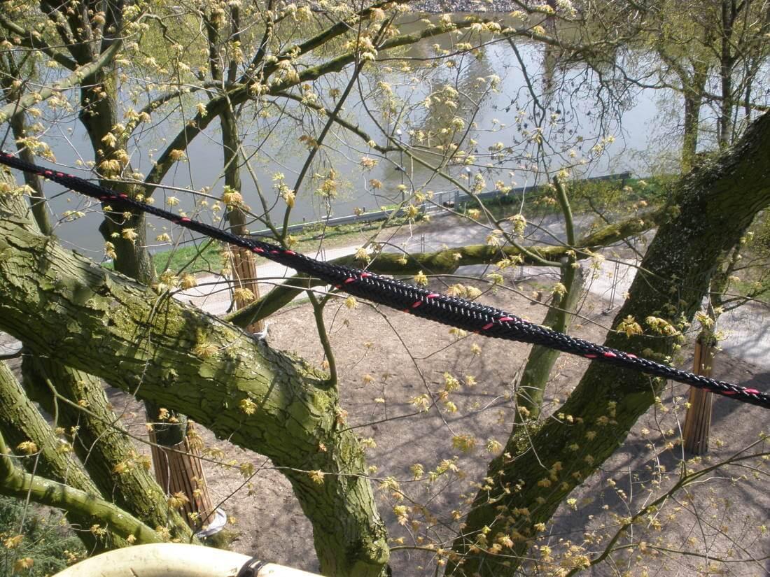 Dynamische Kronensicherung Baumkontrolle