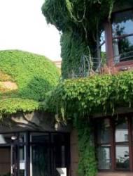 Garten begrünen