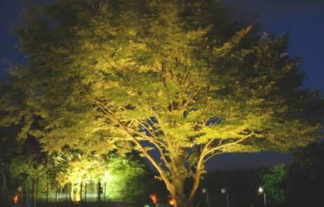 Gartenstrahler Baum
