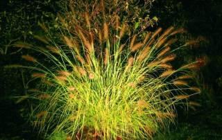 LED Strahler Gräser