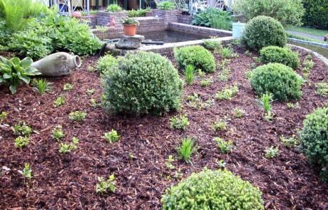 Rindenmulch als Mulchschicht im Garten