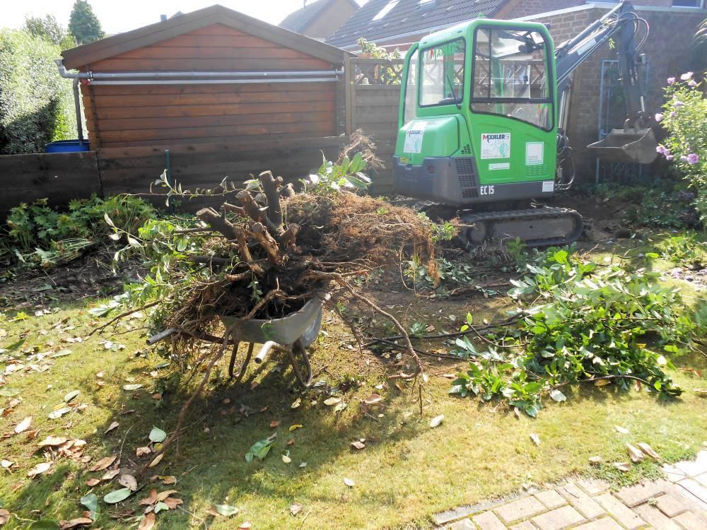 Rodungsarbeiten Garten