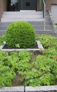 Themengarten Vorgarten pflegeleicht