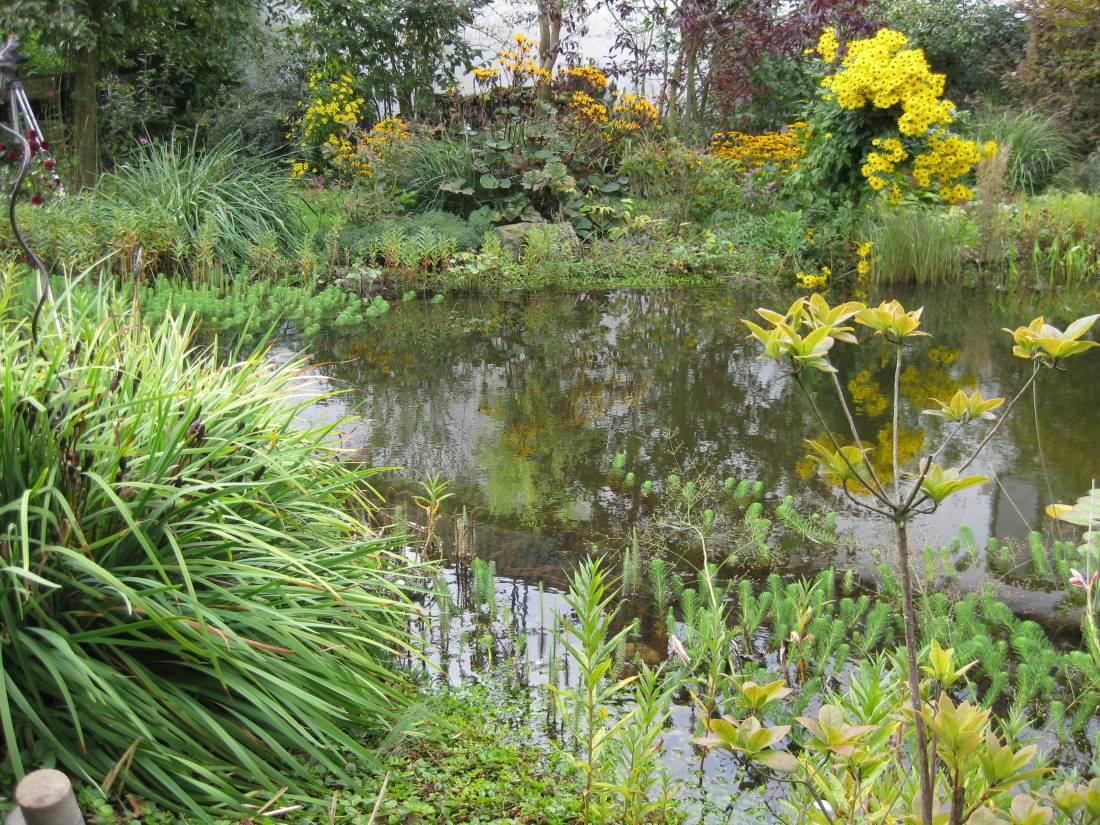 Naturnaher Garten; Naturnaher Garten Kleve; Naturnaher Garten Gestalten