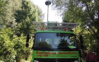 Störche am Niederrhein