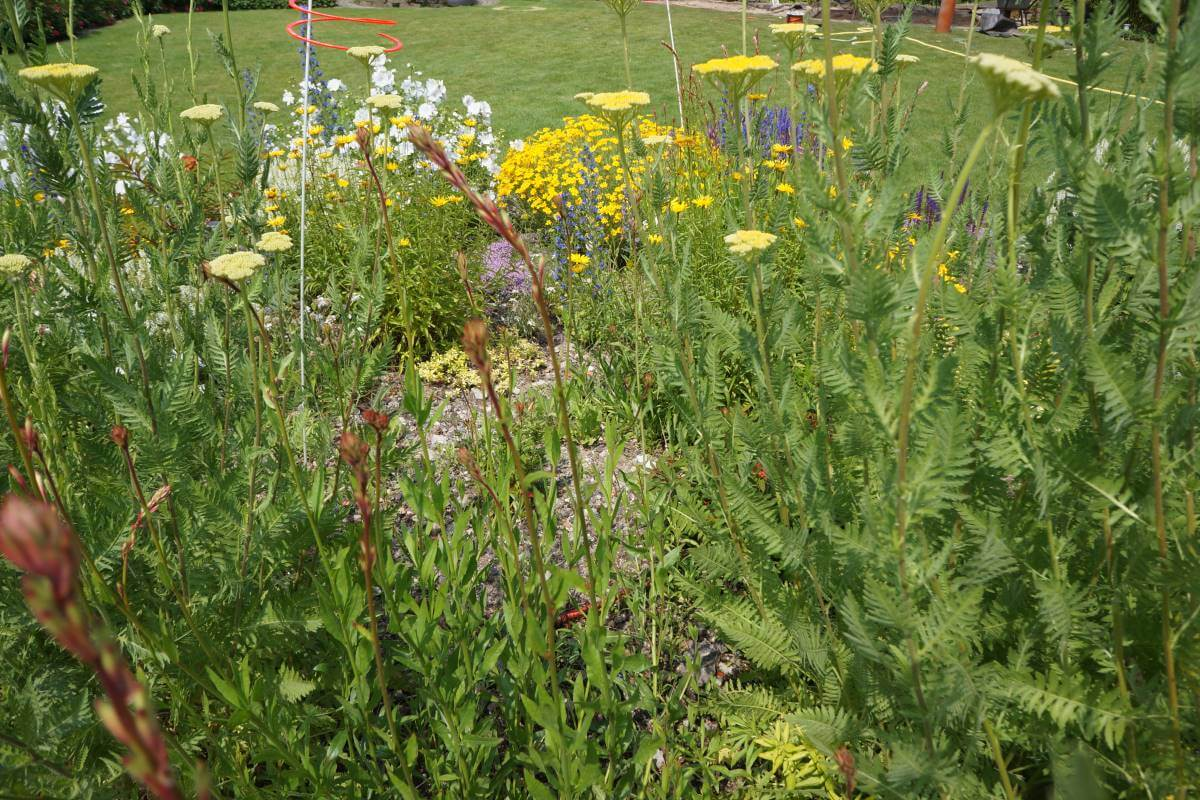 Blumenwiese Kräuterwiese