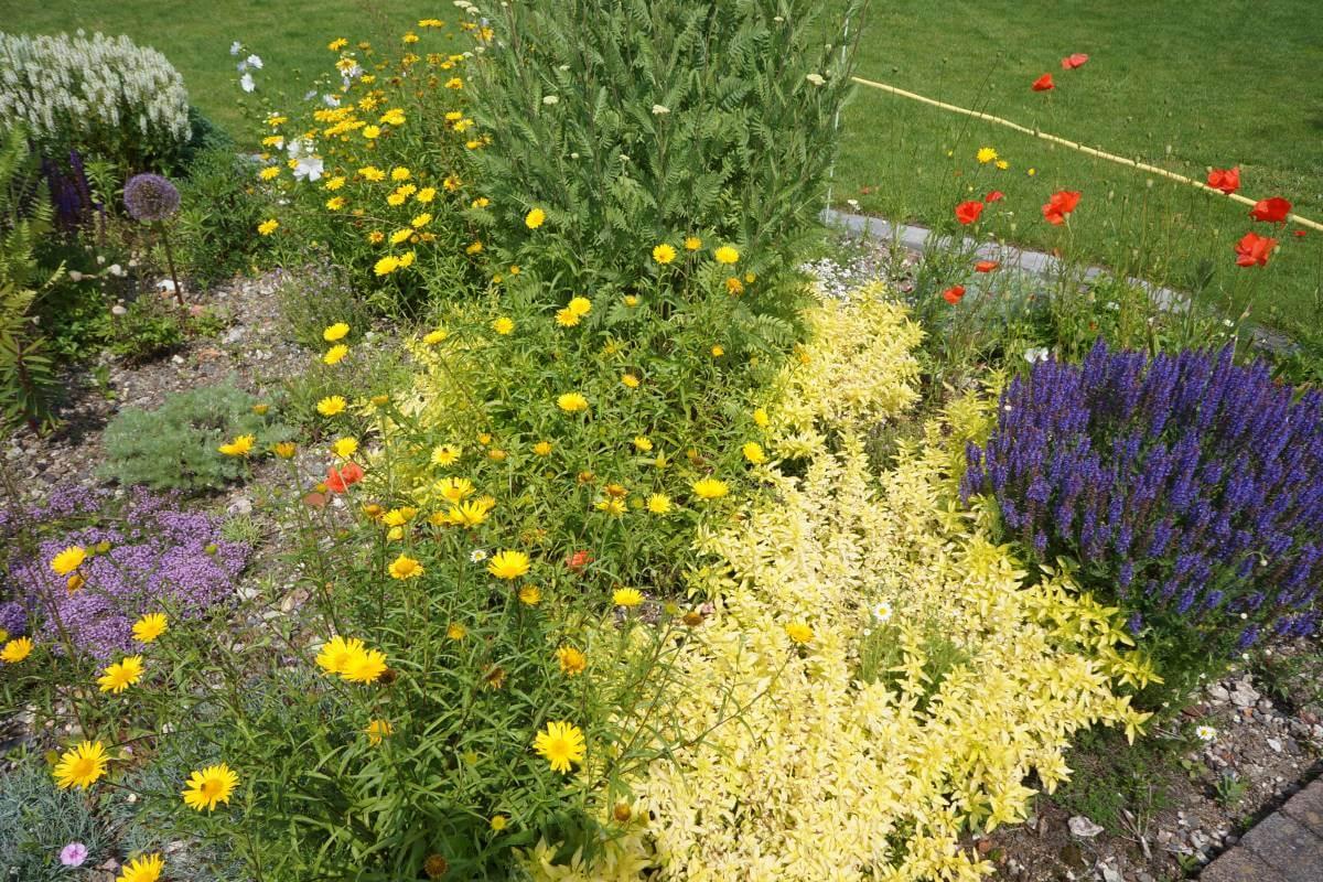 Blumenwiese pflanzen