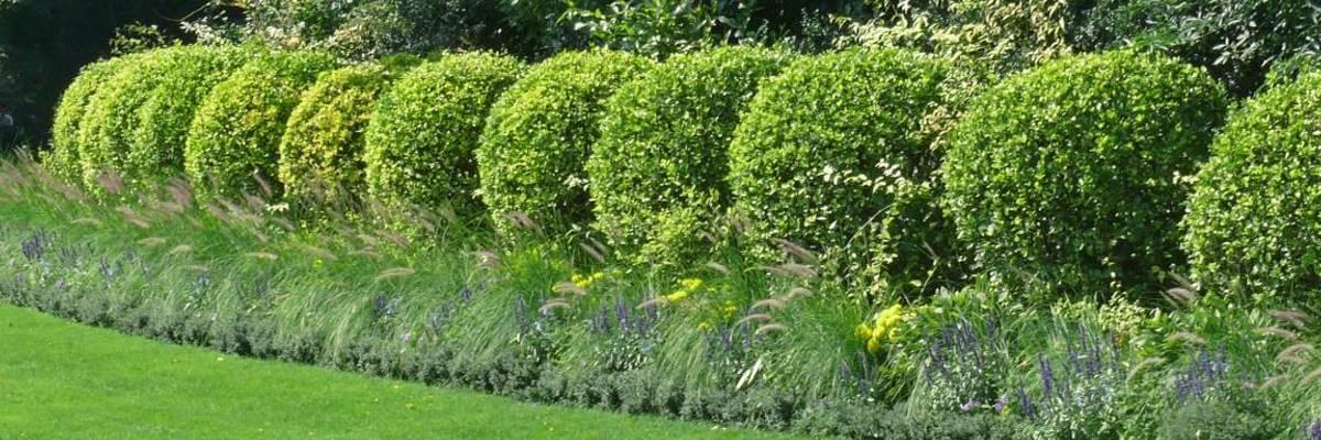 Gartenpflege von Mähler