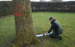 Baumpflege Baumkontrolle