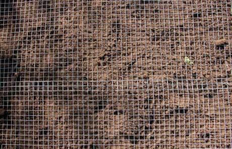 Maulwurf Rasen
