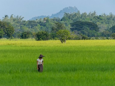 Farmer in the rice fields close to Saddan Cave