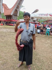 Tana Toraja Funeral Ceremony - present to the honored guest: a fresh buffalo rip Christian Jansen & Maria Düerkop