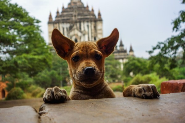 Temple dog in Bagan Christian Jansen & Maria Düerkop