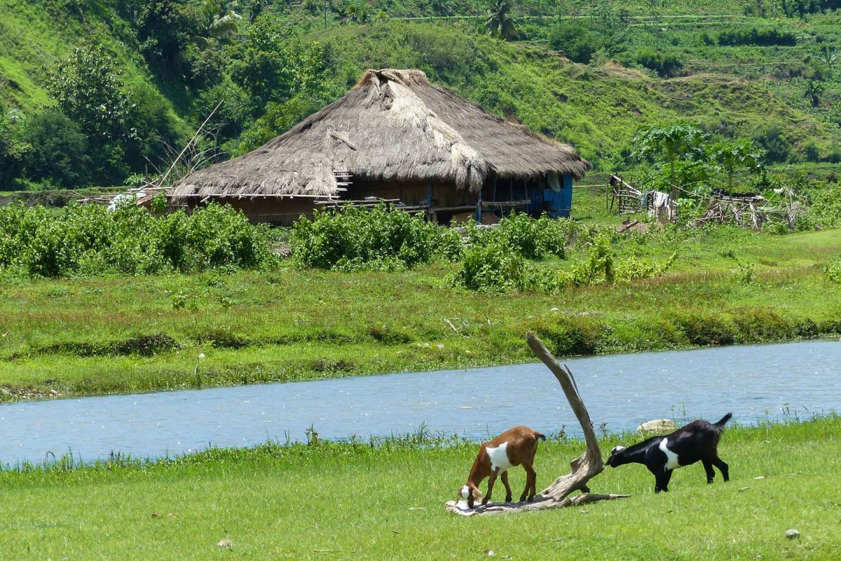 Sumba - peaceful rural scene with goats Christian Jansen & Maria Düerkop