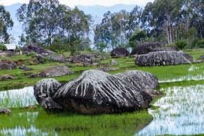 Tana Toraja - monoliths mirroring in rice paddies Christian Jansen & Maria Düerkop