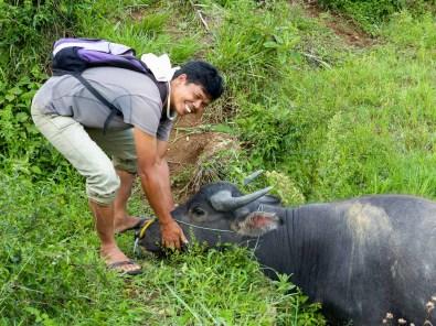 Tana Toraja - Yohanis caresses water buffalo Christian Jansen & Maria Düerkop
