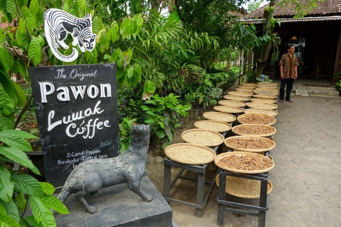 Luwak Coffee - The most expensive coffee in the world is eaten and digested by a weasel like animal - the Luwak Christian Jansen & Maria Düerkop