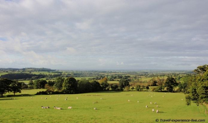 Sheep and fields in northern England, Hadrian's Wall Path