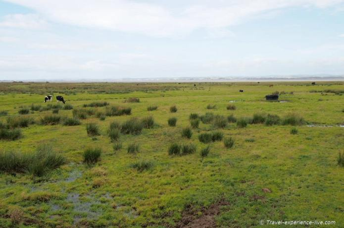 Solway salt marshes on Hadrian's Wall Path