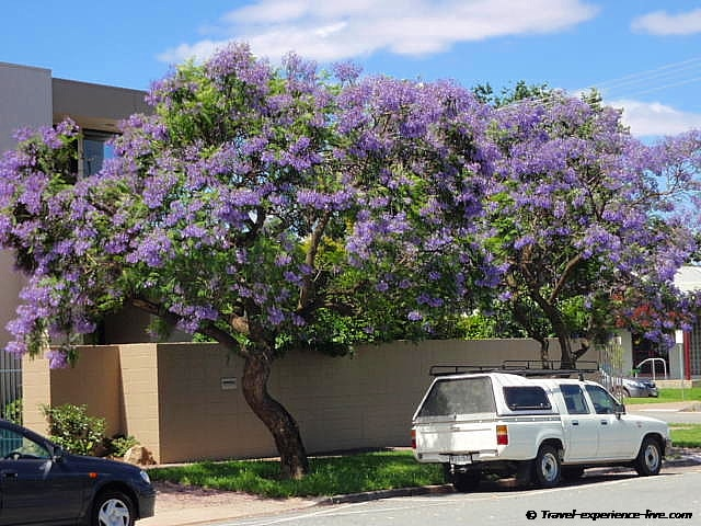 Spring flowers in Australia.