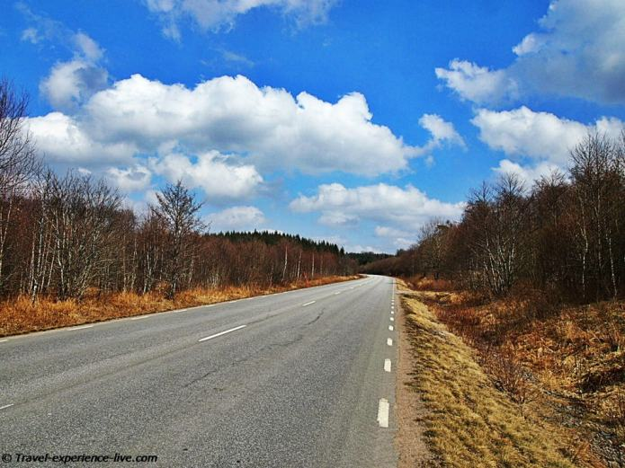 Cycling through dense forests in Sweden.