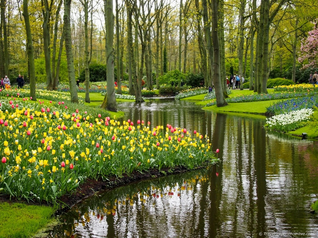 Gorgeous flower gardens in Keukenhof, Holland.