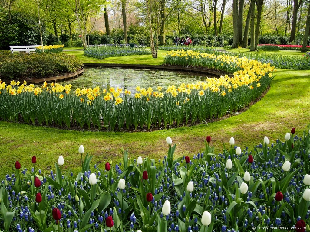 Daffodils and tulips in Holland.