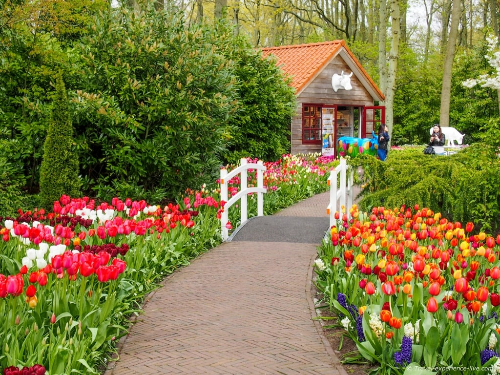 Walking among tulips in Keukenhof, Holland.