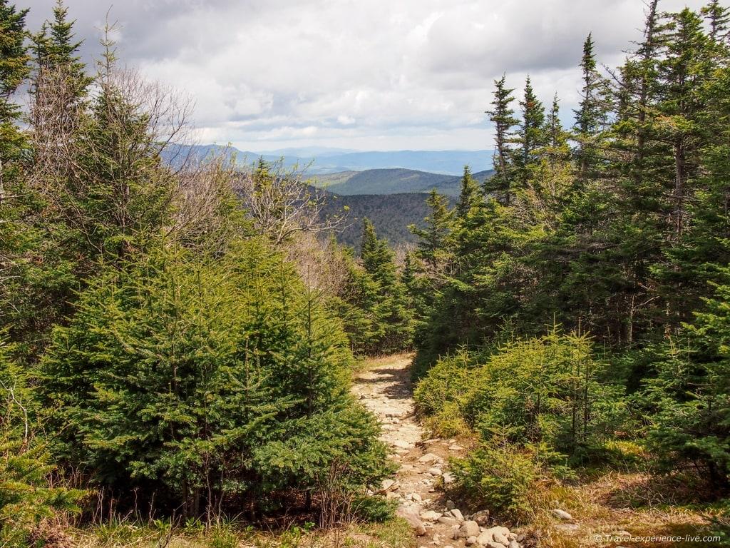 Carriage Road on Mt Moosilauke, New Hampshire.