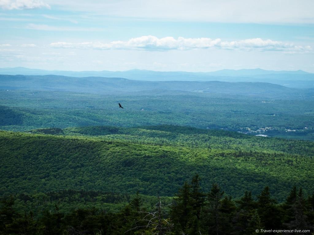 Eagles at Mount Cardigan.