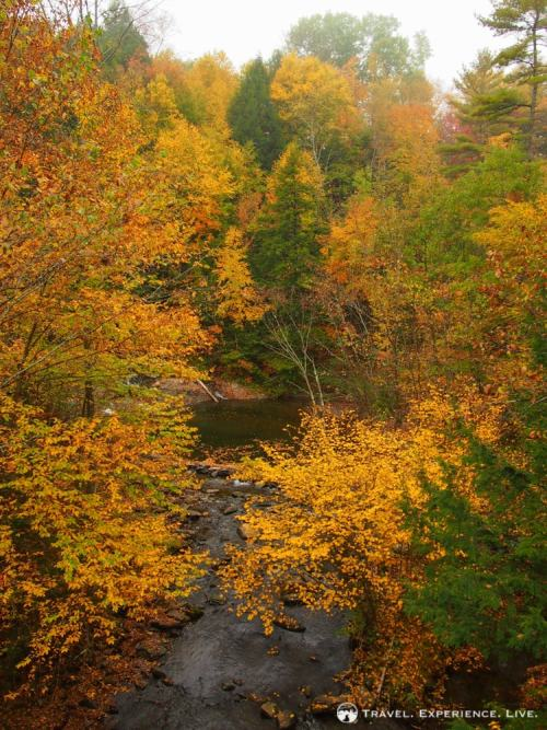 Colorful trees lining a small river in Vermont