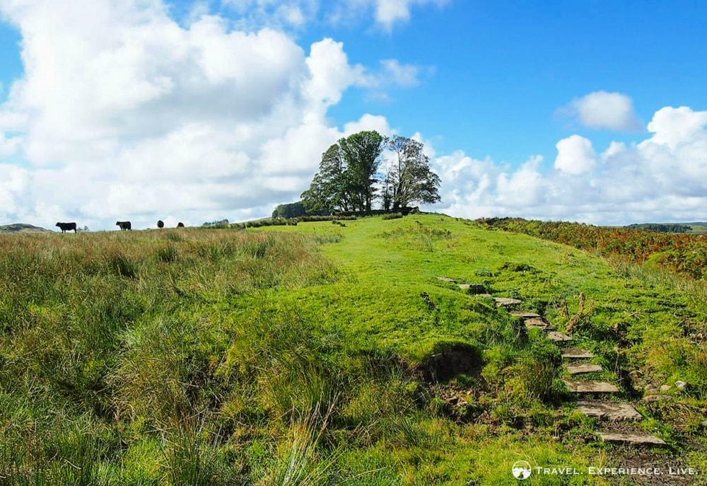 Stone Stairway, Northumberland National Park