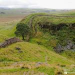 Robin Hood Tree and Hadrian's Wall